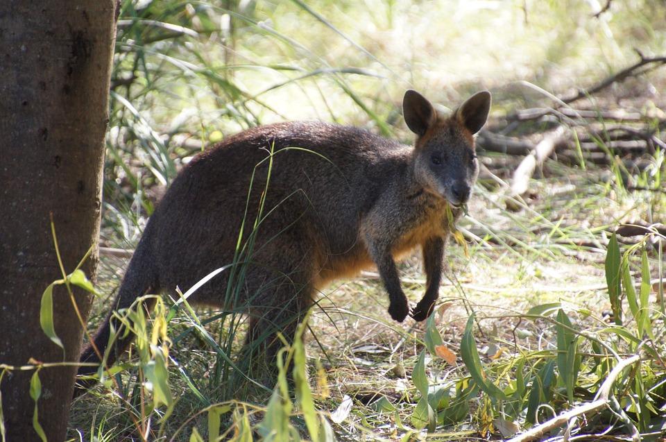 Vacances en Australie: 3 bonnes raisons de s'y rendre pour sa lune de miel
